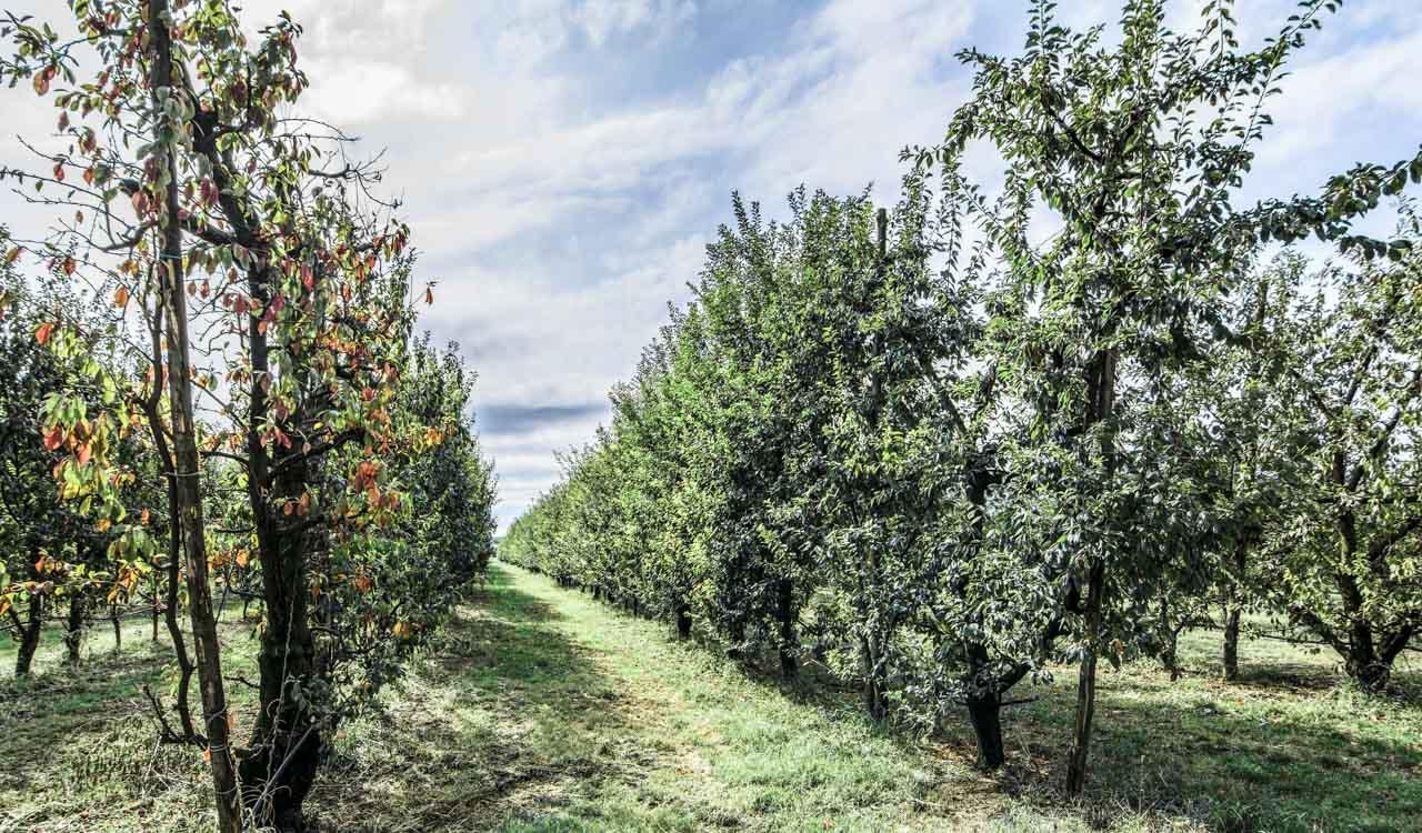 Agriturismo Bella Rama San Cesario Modena